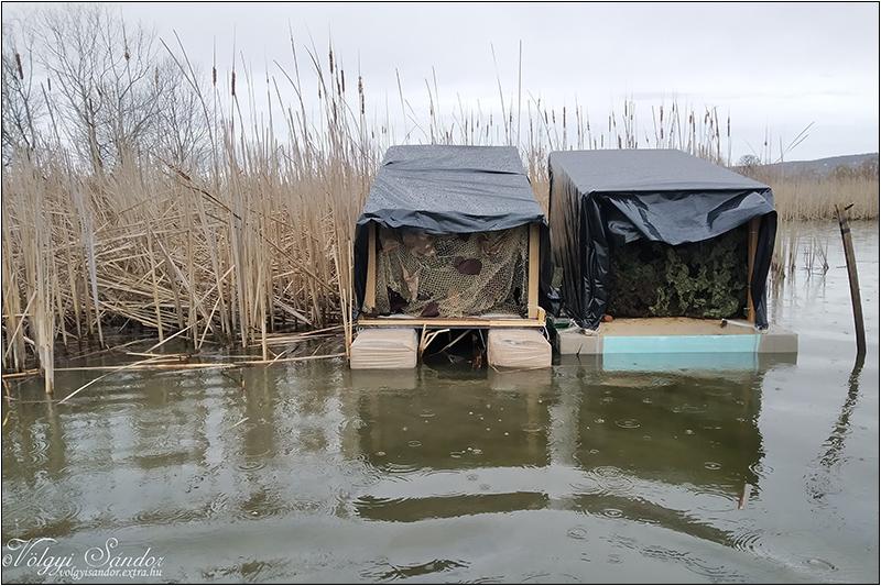 Úszó lesek párban - 2020. március, Pellérd