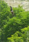 Hamvas rétihéja - 2009. május, Szársomlyó