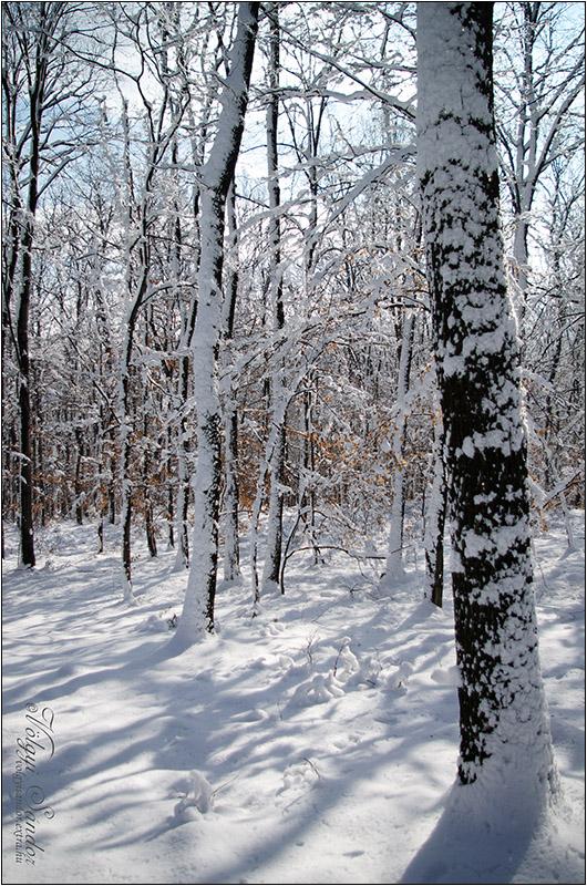 Téli erdő - 2018. február, Mecsek