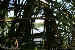 Kilátás a tóra a lesből - 2009. szeptember, Pellérd