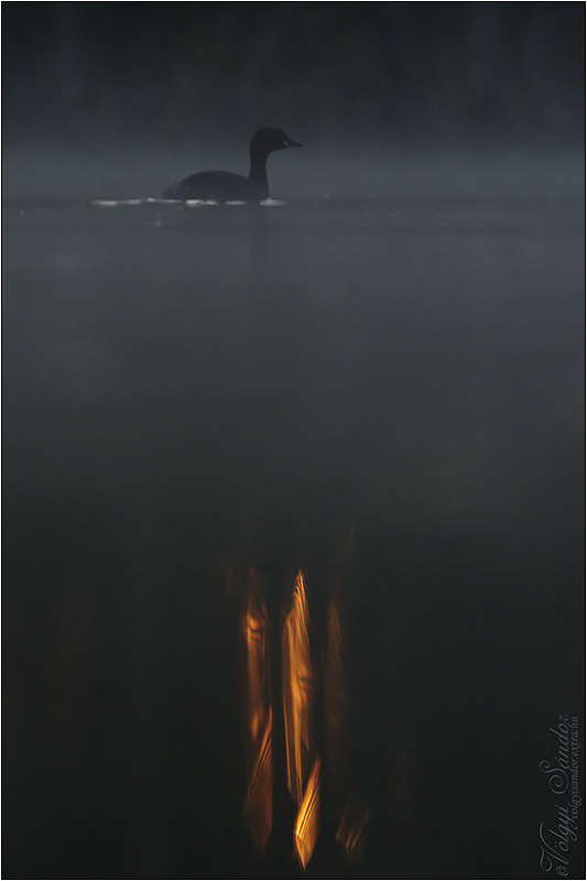 Kis vöcsök - 2021. június, Pellérd