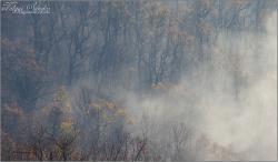 Ködös erdő - 2011.november, Mecsek