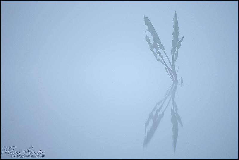 http://volgyisandor.extra.hu/node/3054