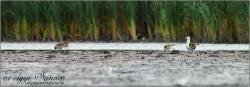 """Pajzsoscankók a tómederben """"lőtávolon"""" kívül - 2009. szeptember, Pellérd"""