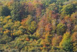 Sokszínű természet - 2008. október, Mecsek