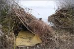 Hevenyészett leshely - 2020. január - Dél-Zselic